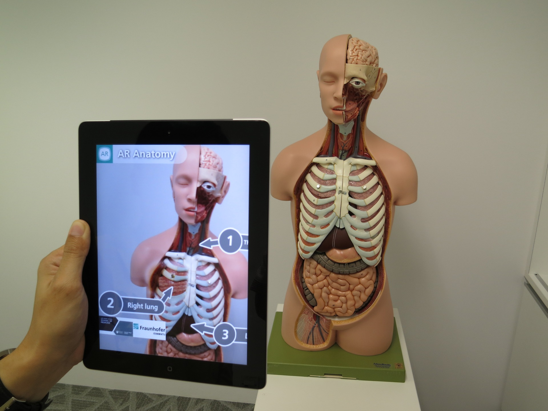 Tablet with AR viewing an anatomical model